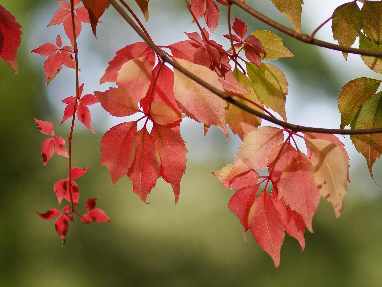 Herbströte...