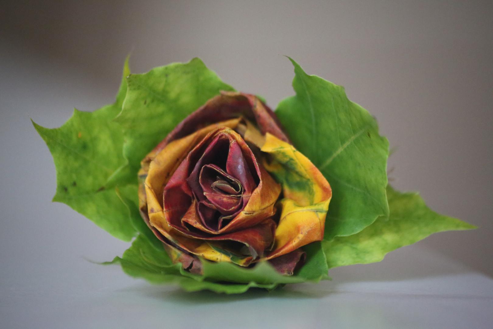 Herbstrose oder ein Bild aus 5 Ahornblättern