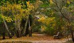 Herbstruhe ..