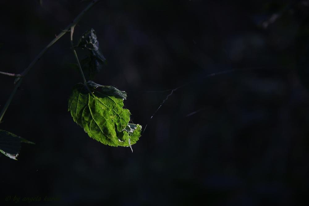 ~ Herbstruhe ~