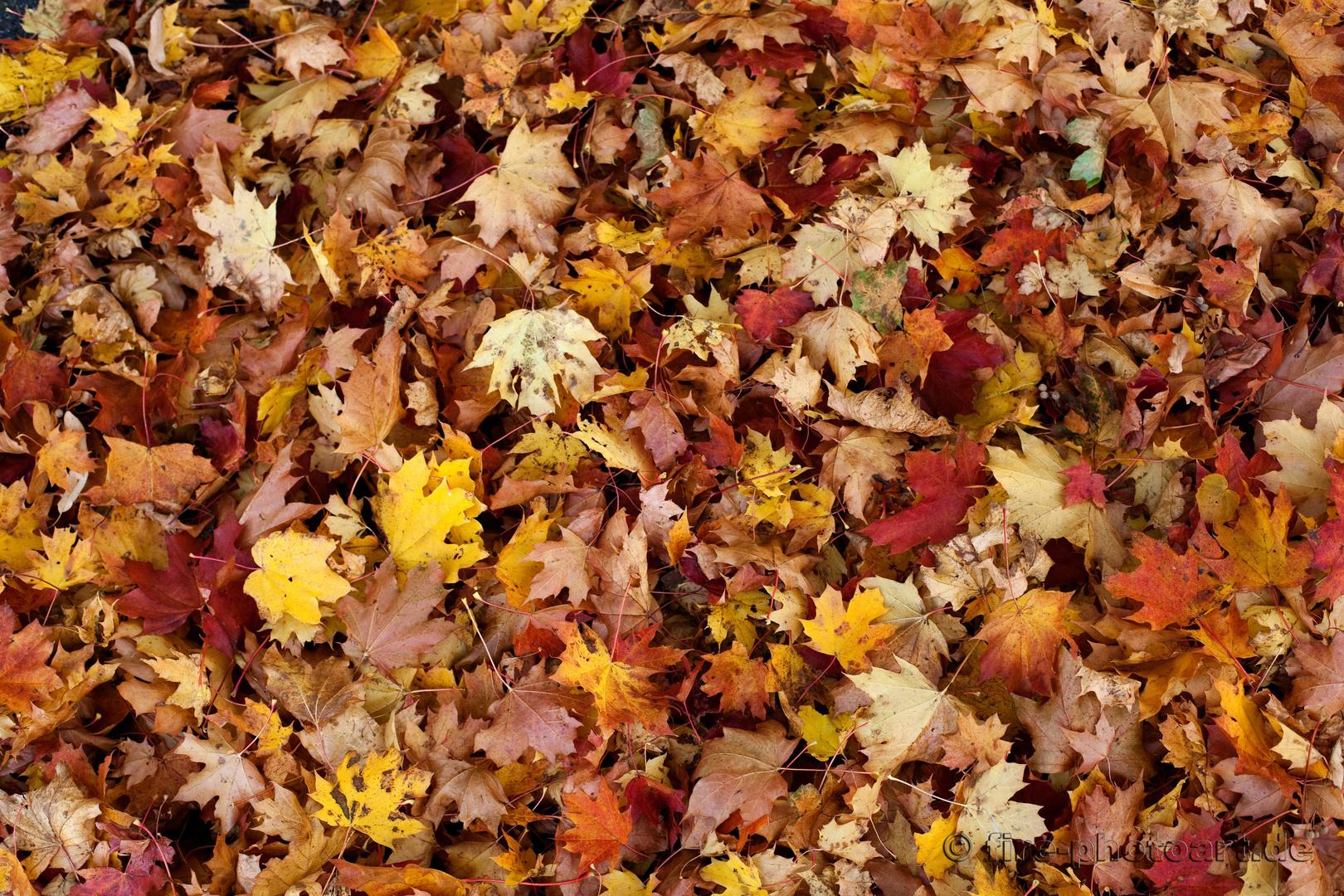 Herbstschau