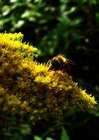 Herbstsonate