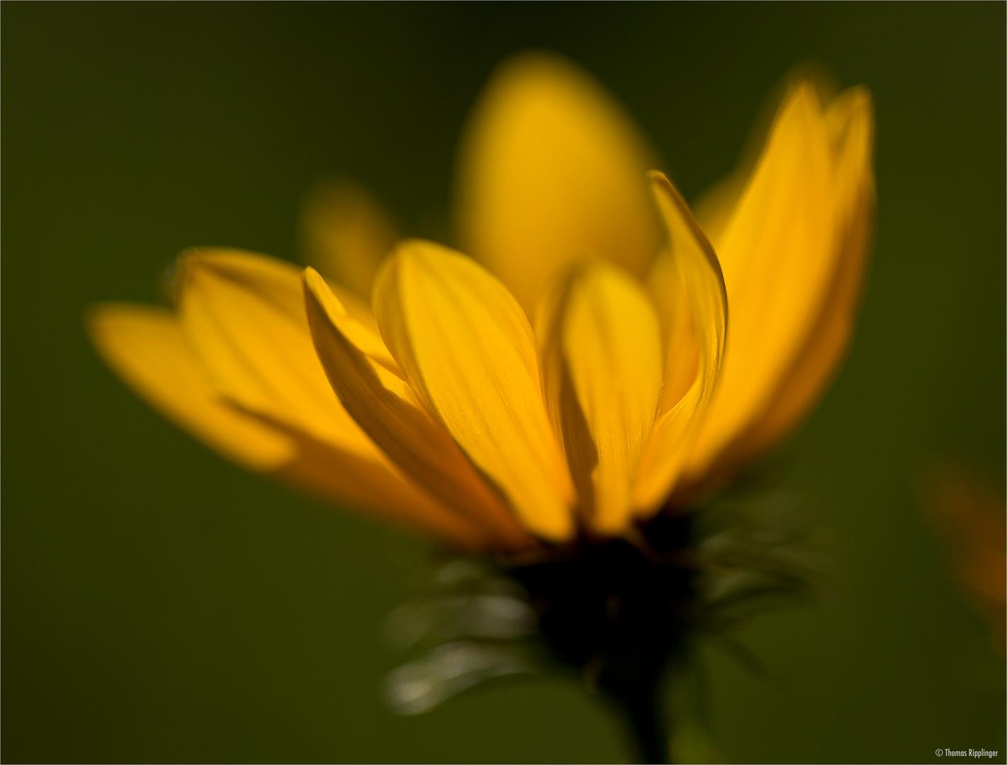 Herbstsonne..