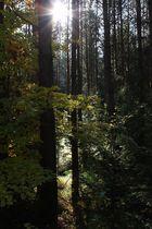 Herbstsonne in den Bäumen