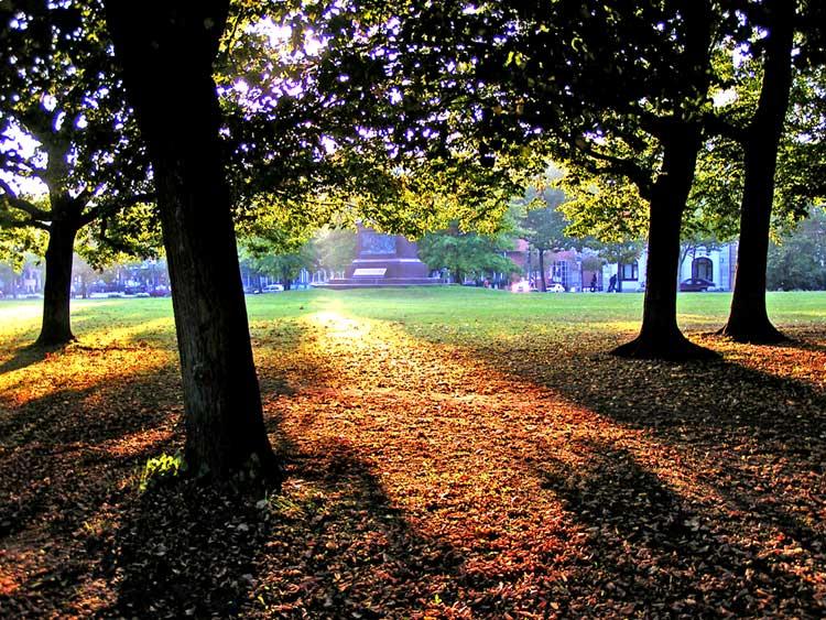 Herbstsonne lässt Schatten werfen