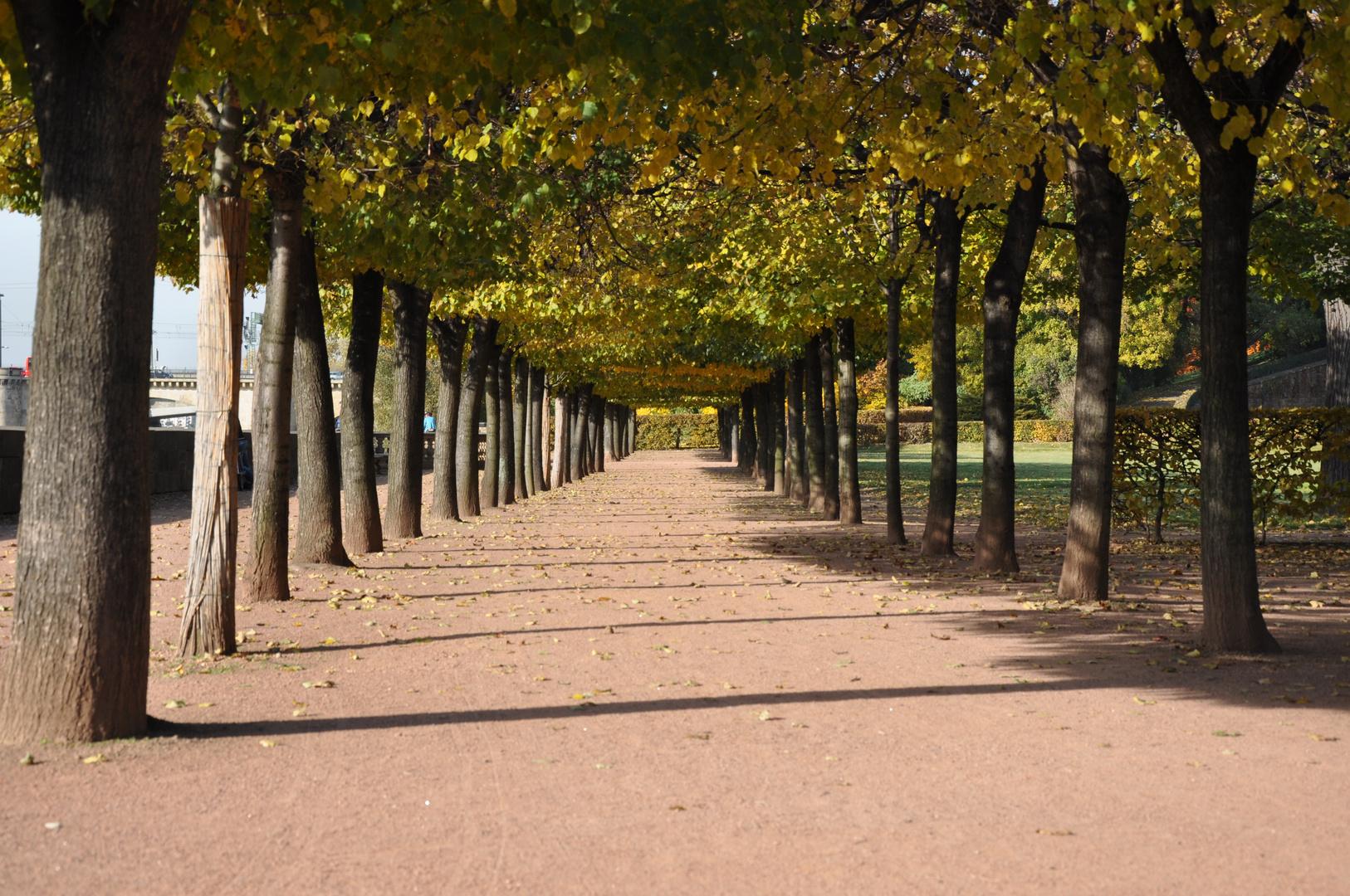 Herbstsonnenspiele in Dresden