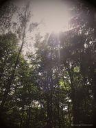 Herbstsonnenstrahlen