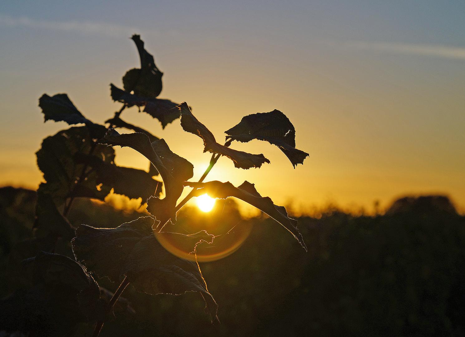Herbstsonnenuntergang