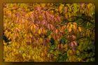 Herbstspaziergang 02