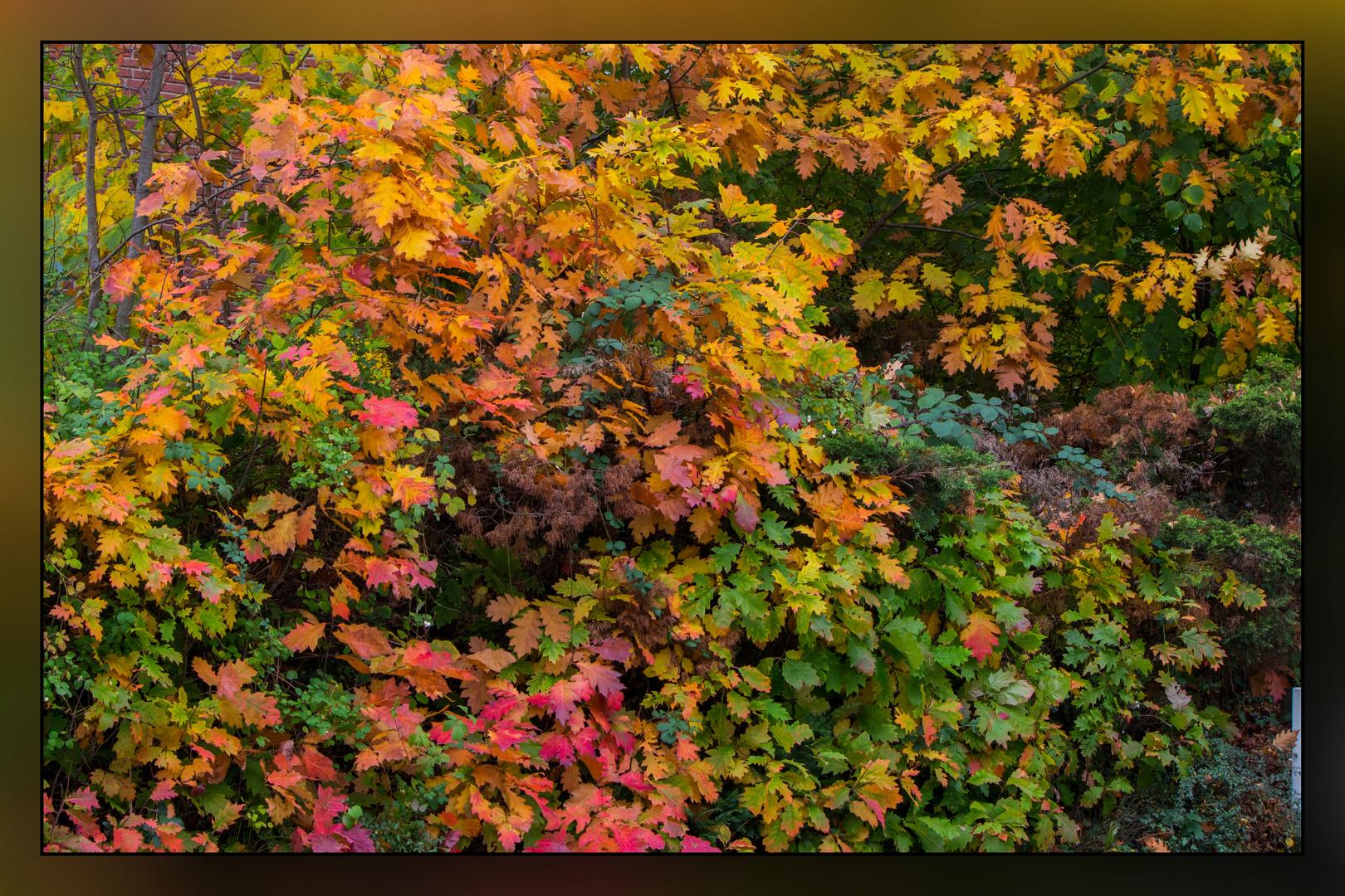 Herbstspaziergang 05