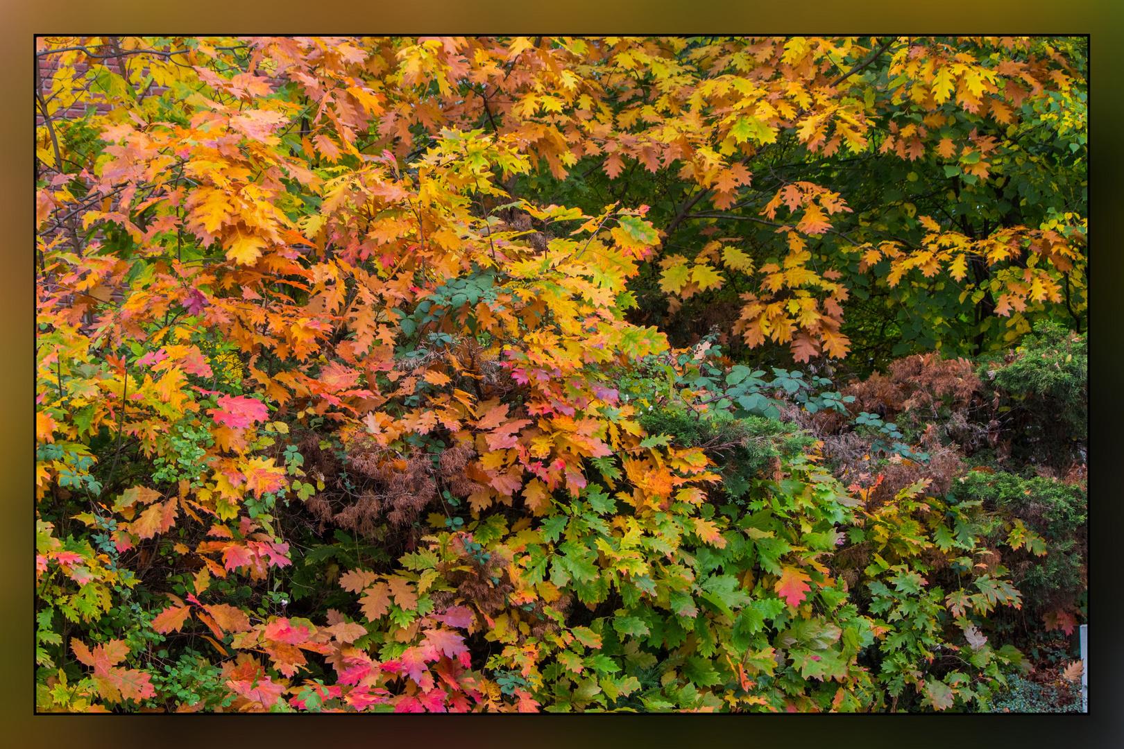 Herbstspaziergang 08