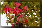 Herbstspaziergang 10