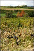 Herbstspaziergang *2*
