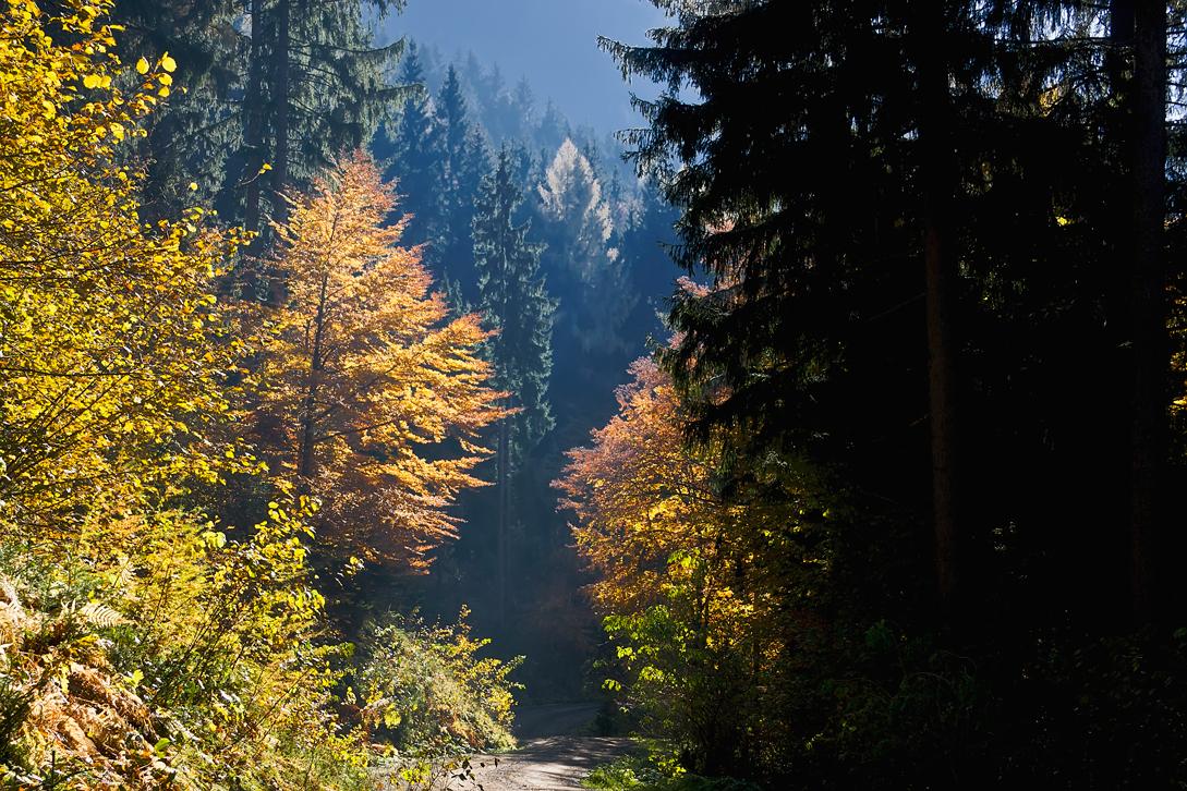 Herbstspaziergang am Dreiländereck