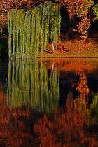 Herbstspaziergang am Neckar in Heilbronn