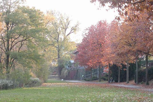 Herbstspaziergang am Seligenstädter Mainufer(2)