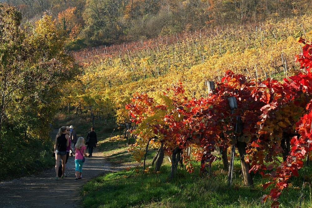 Herbstspaziergang bei sommerlichen Temperaturen
