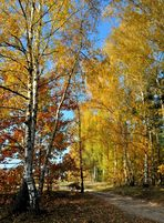 Herbstspaziergang.................... Birken