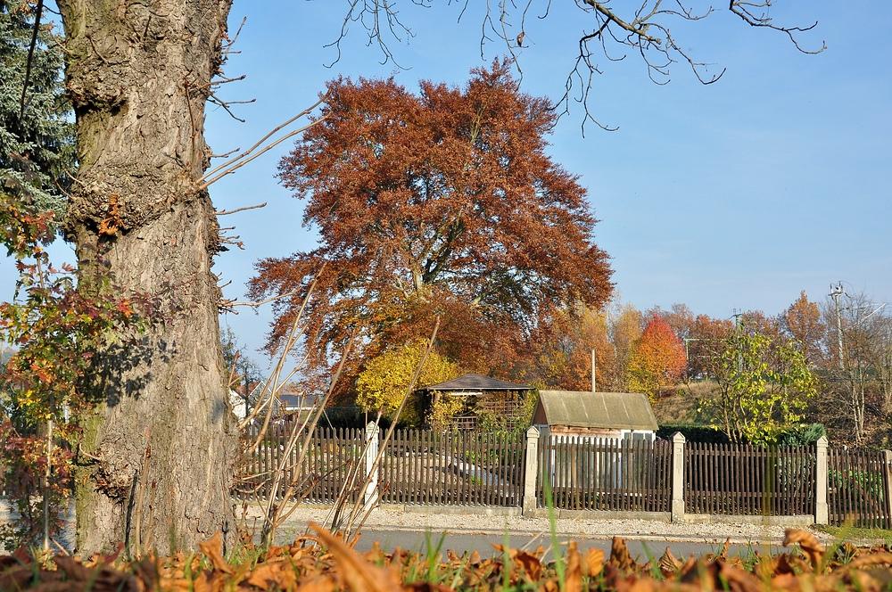 Herbstspaziergang.................... Blutbuche