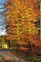 Herbstspaziergang.................... Buchen