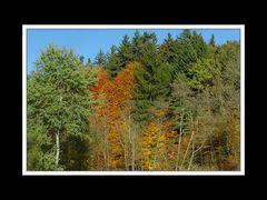 Herbstspaziergang Burgkirchen/Alz 01
