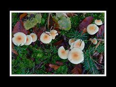 Herbstspaziergang Burgkirchen/Alz 08