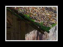 Herbstspaziergang Burgkirchen/Alz 11