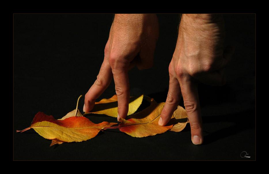 Herbstspaziergang II