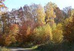 Herbstspaziergang im Harz