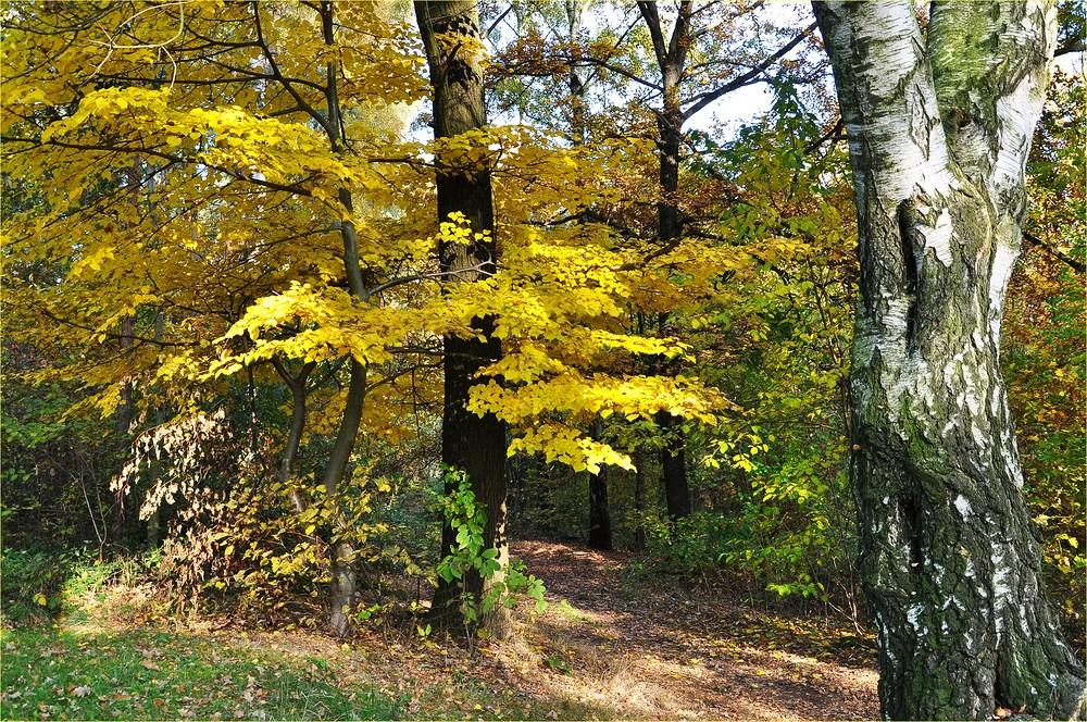 Herbstspaziergang.................... im Wald