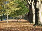 Herbstspaziergang in Bonn/Beuel