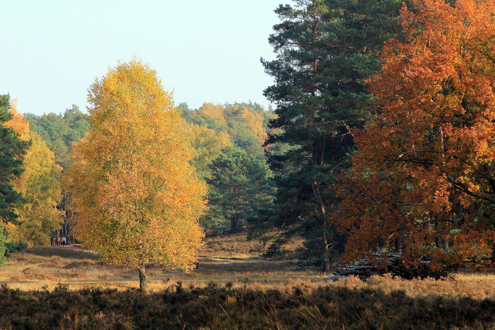 Herbstspaziergang in der Fischbeker Heide...