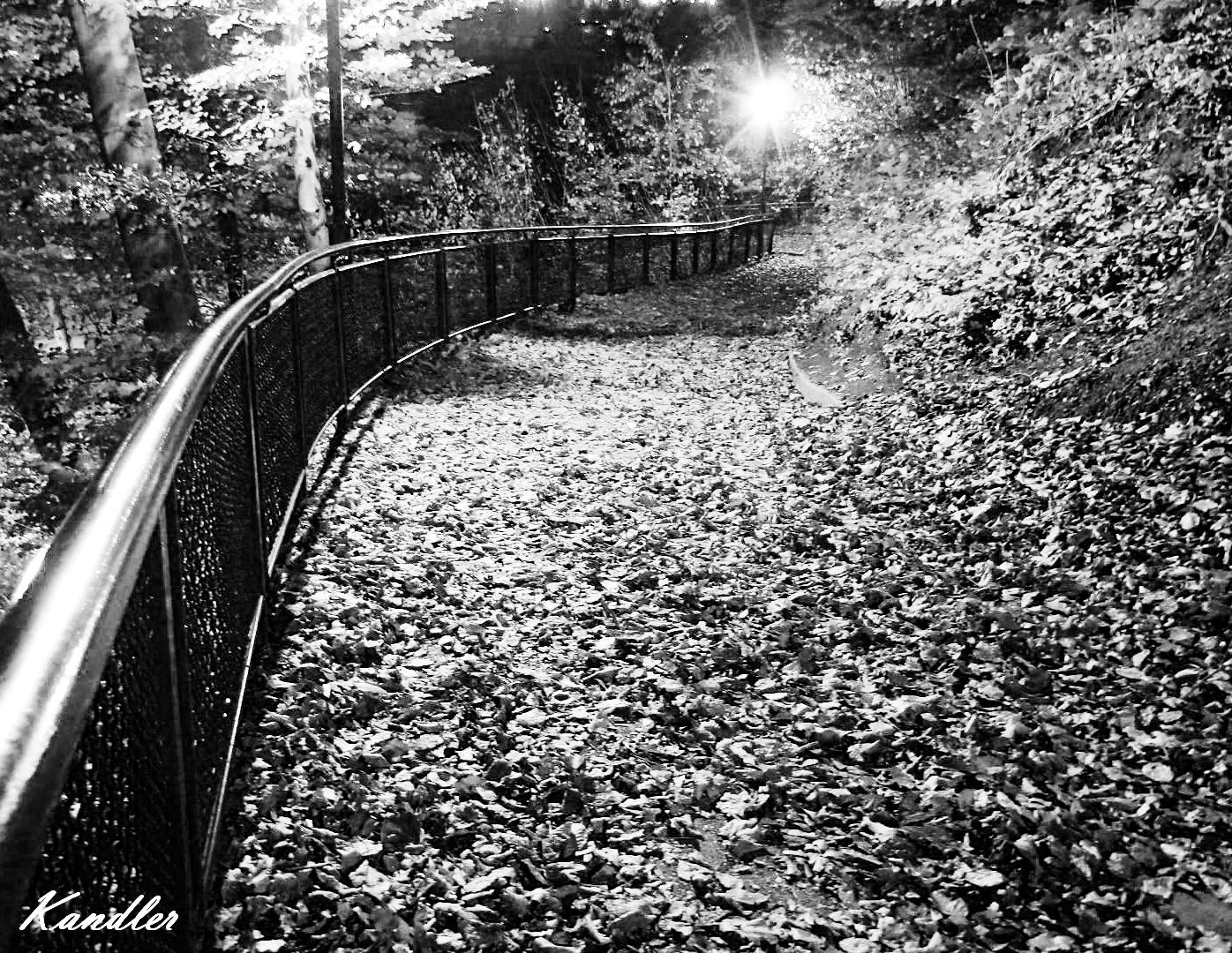 Herbstspaziergang in Schwarz - Weiß