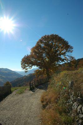 Herbstspaziergang in Südtirol