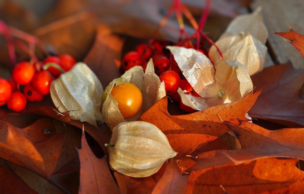 Herbstspaziergang.................... Stillleben