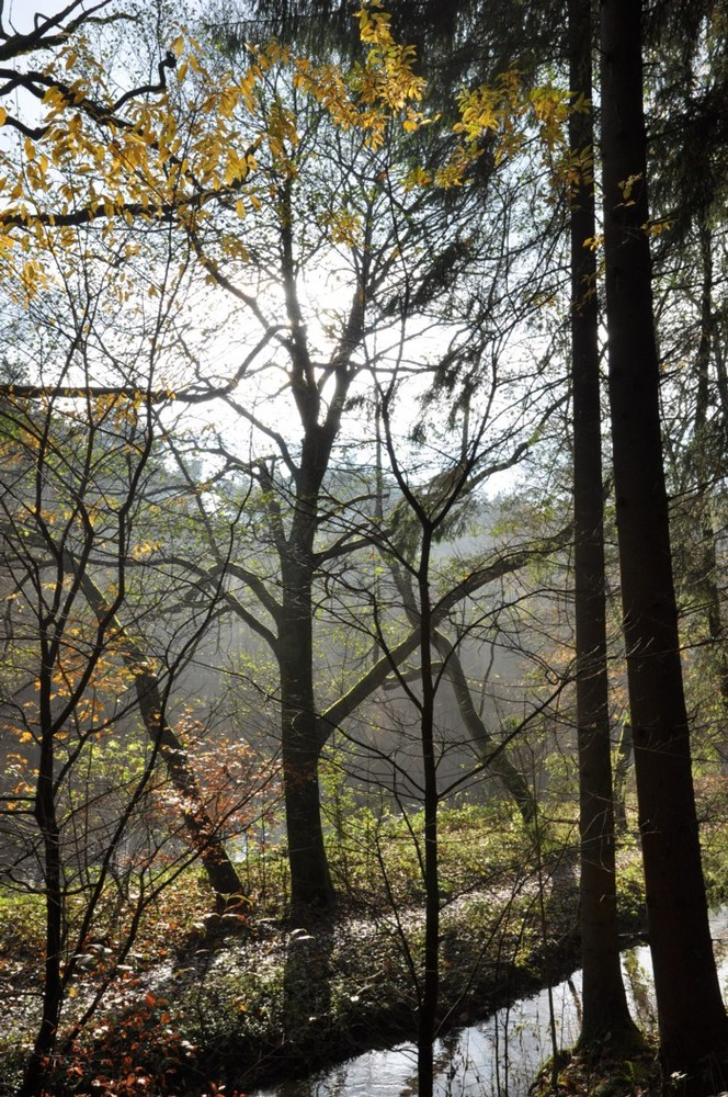 Herbstspaziergang2