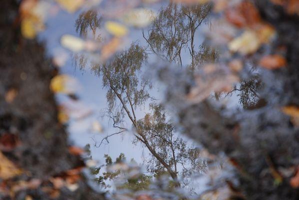 Herbstspiegelei