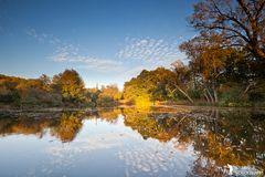 ***Herbstspiegelungen***