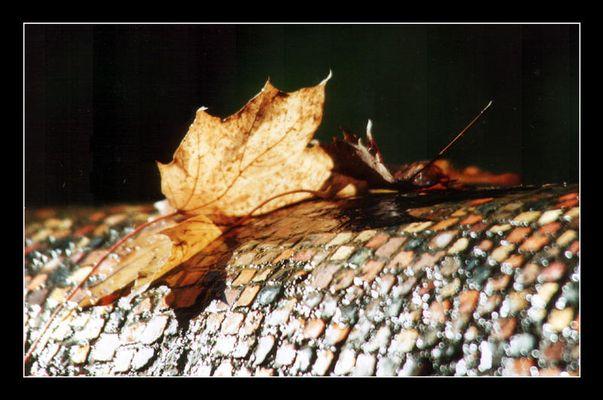 Herbstspiel