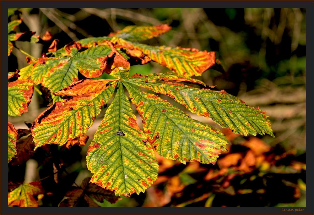 Herbstspuren 1