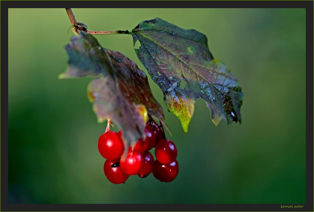 Herbstspuren 2