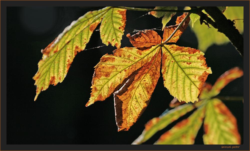 Herbstspuren 3