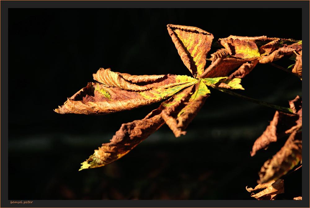 Herbstspuren 4