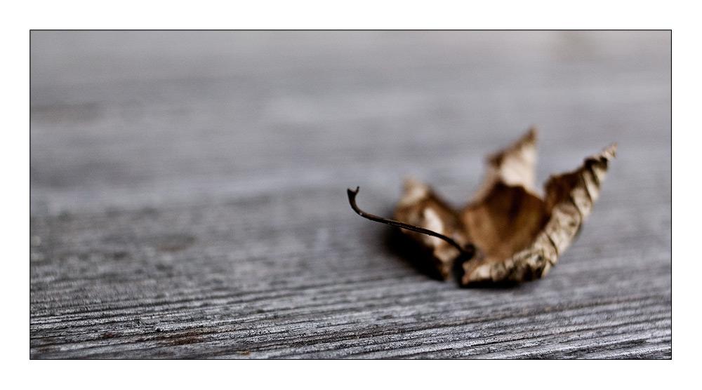 Herbststengel