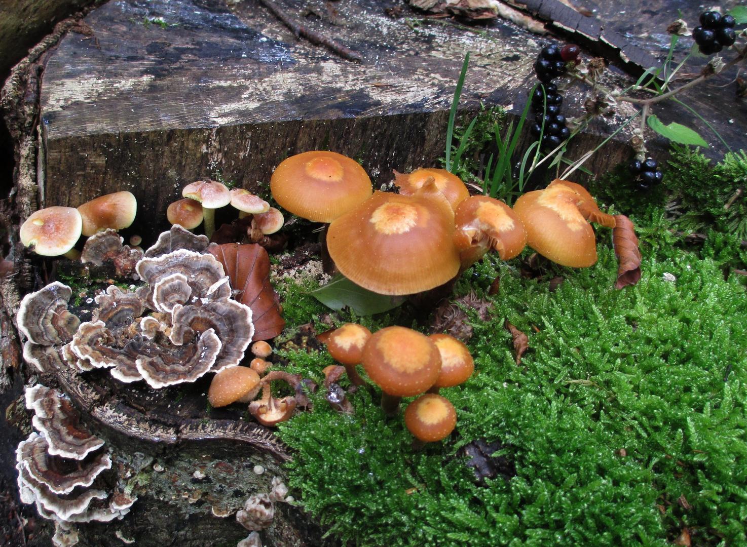 Herbststilleben im Wald
