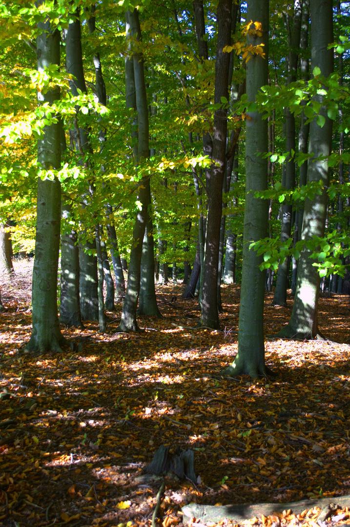 Herbststimmng m Wald