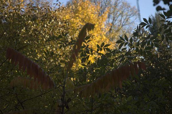 Herbststimmung 07