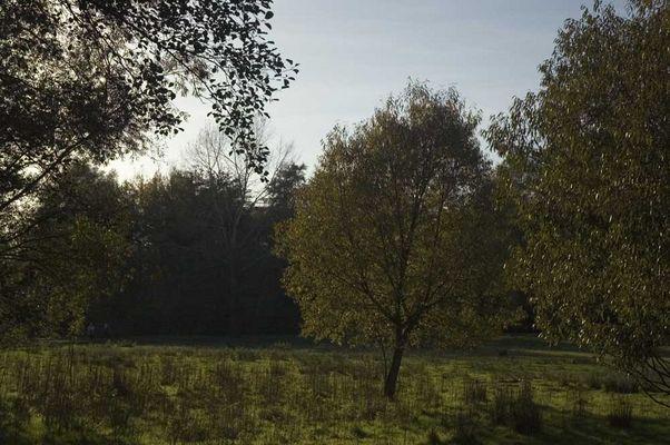 Herbststimmung 08