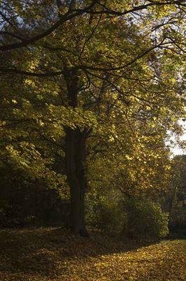 Herbststimmung 09