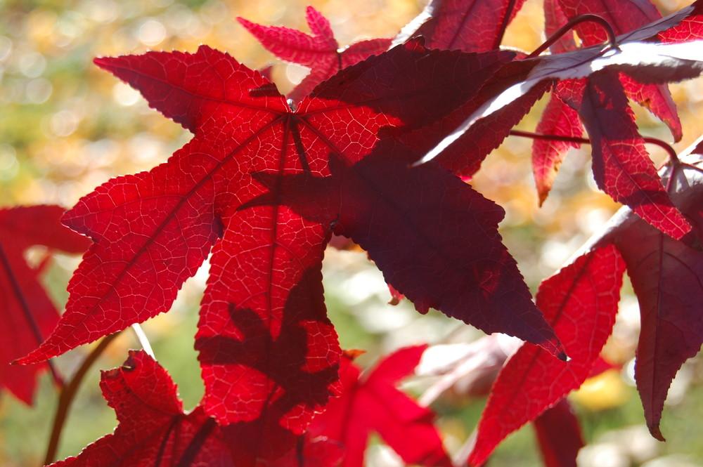 Herbststimmung 1
